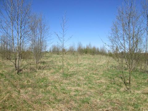 Низовицы: Земельный участок 27 соток (в собственности) ИЖС - Фото 2