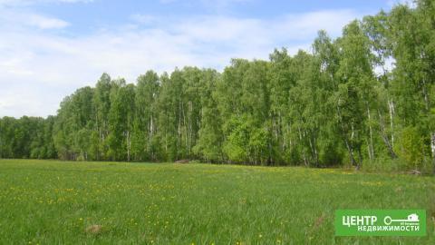 Участок у леса и реки на краю деревни - Фото 5