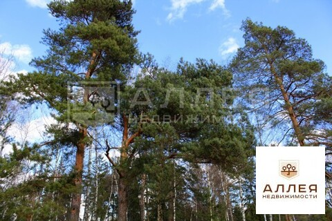 Лесной участок 18 сот. - Фото 2