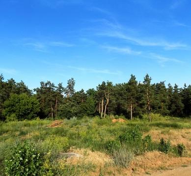 Земельный участок 28 сот в закрытом поселке Латошинка - Фото 1