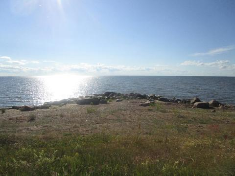 Участок у Чудского озера - Фото 3