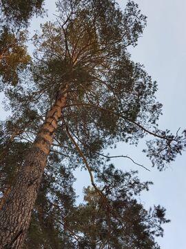 Земельные участки, Золотой Карп (горный щит) Оч. 1, Толстого, д.77 - Фото 2