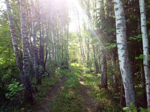 Лесной участок 6 Га (600 соток) на берегу озера. - Фото 5