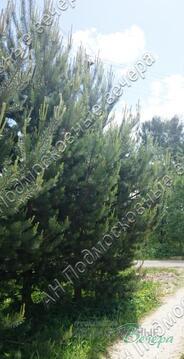 Каширское ш. 55 км от МКАД, Ляхово, Участок 6 сот. - Фото 5