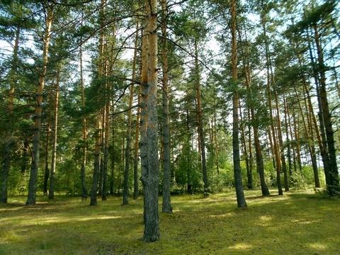 Судогодский р-он, Спас-Купалище с, земля на продажу - Фото 4