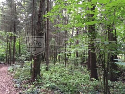 Лесной участок 16 сот. - Фото 2