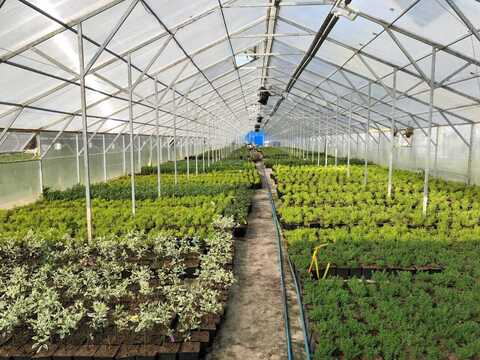 Тепличное хозяйство и складские помещения - Фото 2