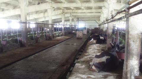 Фермерское хозяйство в Удмуртии - Фото 3