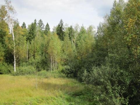 Лесной участок 10 сот, газ, охрана, Киевское ш, 49 км. от МКАД. - Фото 4