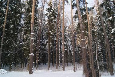 Большой лесной участок в элитном поселке дом и бассейн в подарок - Фото 4