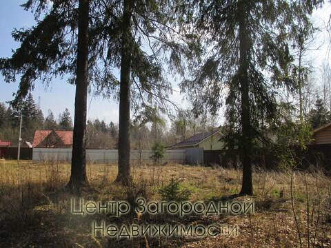 Участок, Ярославское ш, 29 км от МКАД, Лесной п. Ярославское шоссе, 29 . - Фото 3
