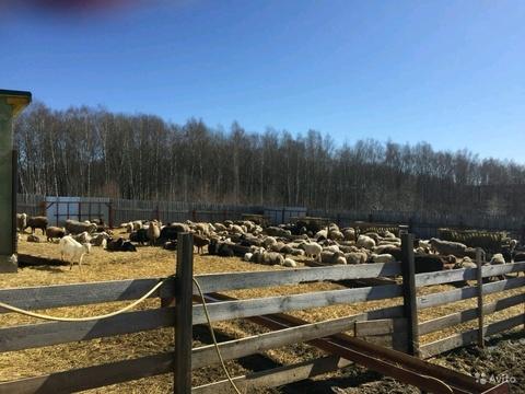 Готовое фермерское хозяйство - Фото 1