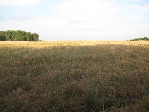 Продажа земельного участка 5,5 га сельхоз вблизи каскада озер - Фото 4