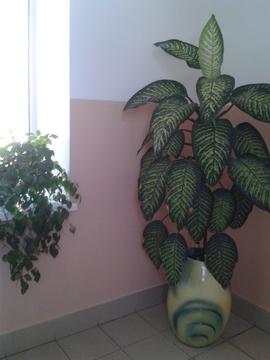 Офис в центральной части города Барнаула - Фото 5