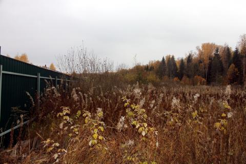 Прилесной участок в СНТ, окруженном с четырех сторон грибным лесом - Фото 4