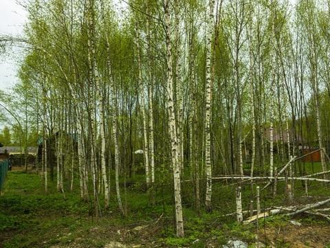 Земельный участок в лесу, 10 соток, Киевское ш, 55 км, Лесная радуга - Фото 5