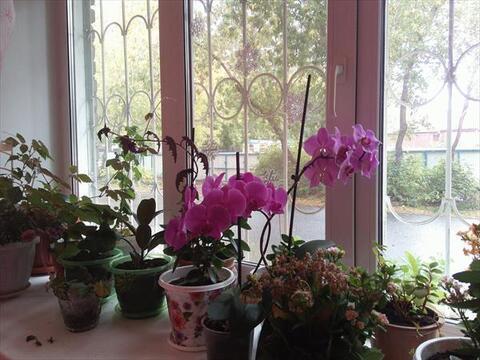 2 к. квартира с ремонтом на Карском 33 - Фото 4