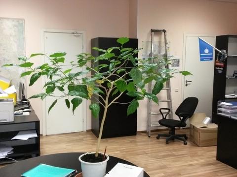 Сдается помещение складского-производственного назначения с офисом - Фото 3