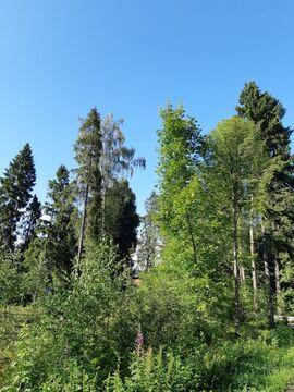 Участок 15,5 соток. Ярославское ш 25 км от МКАД, Правдинский - Фото 3