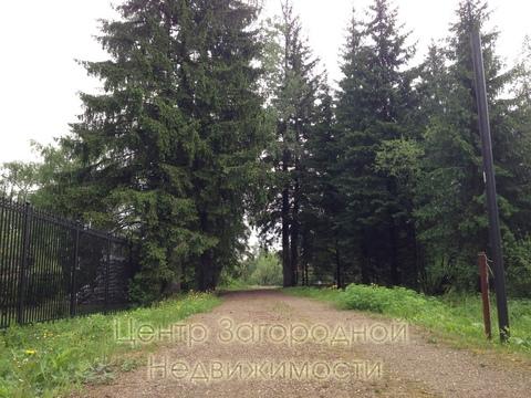 Участок, Киевское ш, Калужское ш, Минское ш, 27 км от МКАД, Елизарово . - Фото 3