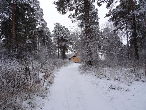 Участок в окружении соснового леса, п. Исток, черта Екатеринбурга. - Фото 3
