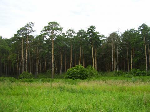 Земельный участок в п.Чернолучье - Фото 5