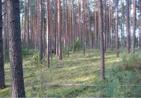 Продажа участка, Погорелово, Новоржевский район - Фото 5