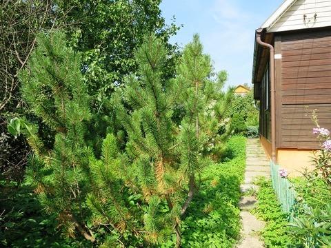 Дача 60 кв.м, Нововоронино, Ярославское ш. 38 км от МКАД - Фото 2