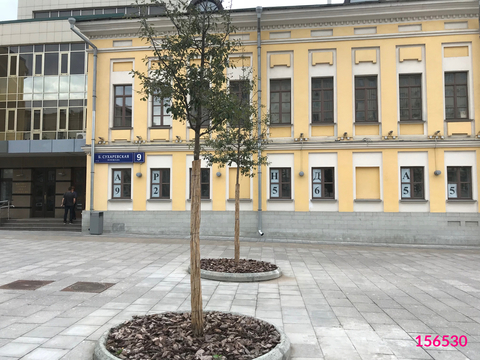 Аренда псн, м. Сухаревская, Большая Сухаревская площадь - Фото 5