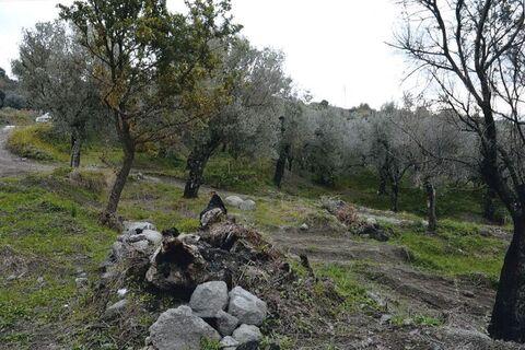 Земельный участок в Италии 2,61 га - Фото 2