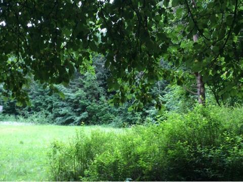 Лесной участок на уютном поселке на берегу Москва-реки - Фото 3