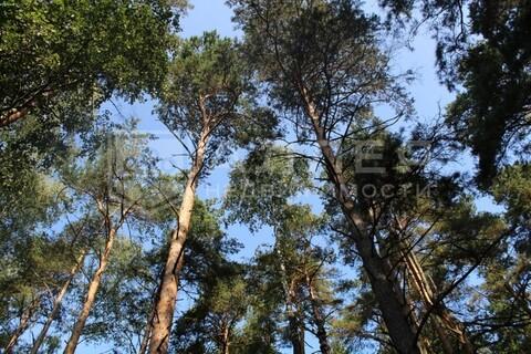 Лесной участок 18.3 сот. - Фото 3