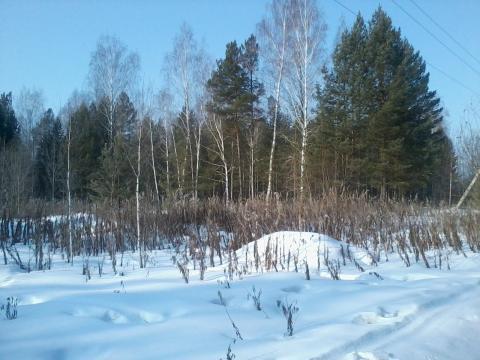 Земельный участок рядом с лесом - Фото 1