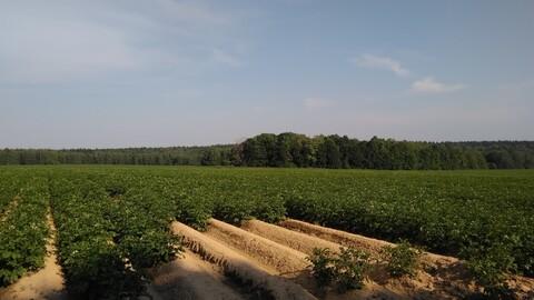 Продается ровный, сухой земельный участок, площадью 71,4 га - Фото 3