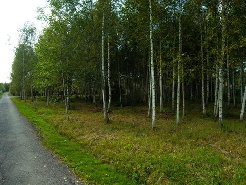 Коттедж 160м2, 10сот, Киевское ш, 55 км, в лесу, уникальное место - Фото 5