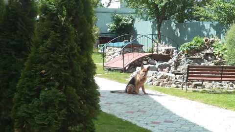 Продам элитный дом в Советском районе г. Брянска - Фото 4