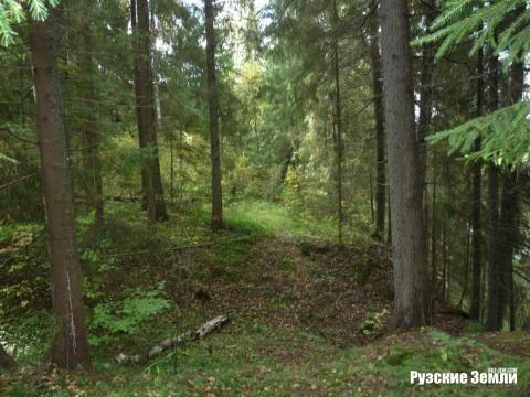 Редкое предложение - лесной участок с собственнымм пляжем - Фото 2