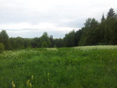 13 гектар кфх в Василево, Переславский район - Фото 3