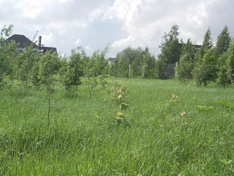 Продам земельный участок в д.Павловское Истринского р-на Московской об - Фото 2