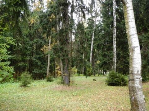Участок 2,3 га под застройку в Химках полностью лесной