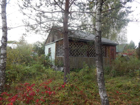 Дача 45 кв м на участке 10 сот в лесу по Минскому ш. близ д. Шаликово. - Фото 1