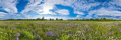 Продажа: земельный участок 710 соток, Кувшиново - Фото 2