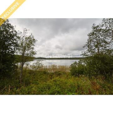 Продажа земельного участка 1,25 Га в д. Гомсельга на 1 береговой линии - Фото 1