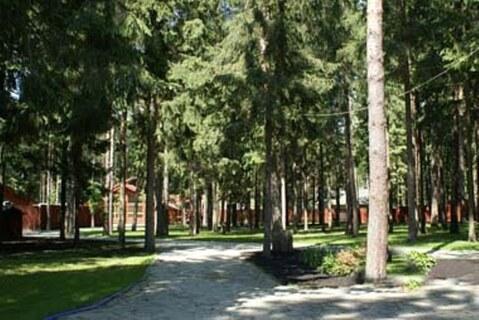 Большой лесной участок в элитном поселке дом и бассейн в подарок - Фото 1