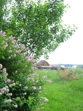 Деревня Петелино. 15 соток, ИЖС, Магистральный газ, 35 км. от МКАД - Фото 4