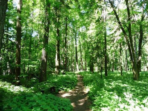 Шикарный участок У леса всего В 9 км от МКАД - Фото 4
