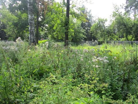Продается земельный участок в г. Пушкино, ул. Учинская - Фото 3