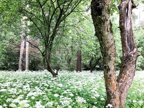 Лесной участок 25 соток на Ярославском шоссе - Фото 4