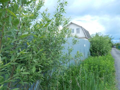 Земельный участок в СНТ на землях населённых пунктов - Фото 1