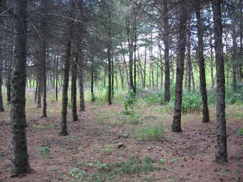 Роща (лесной участок) 330 Га в Воронеже, под дачный поселок.